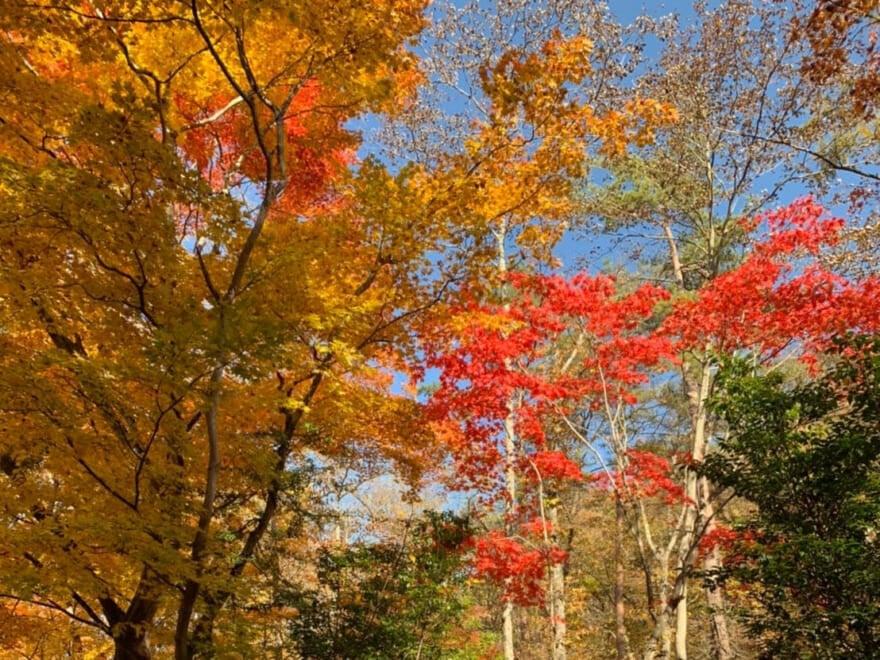 紅葉を見に3年ぶりの軽井沢へ。懐かしい気持ちに浸りながら楽しんできました![守屋光治ブログ]